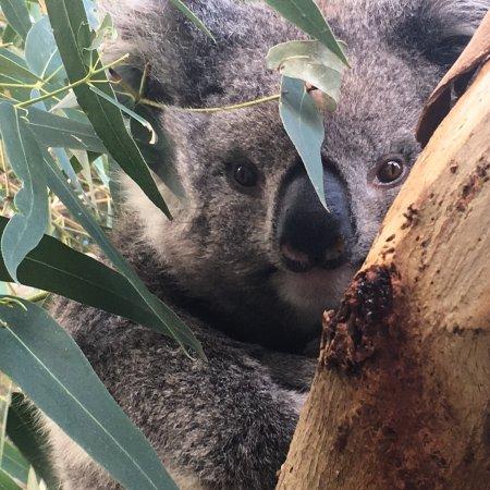 Walkerville, Austrália: photo1.jpg