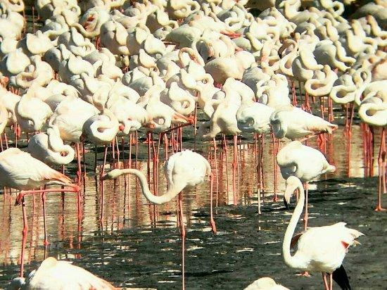 拉斯奥科尔野生动物保护区