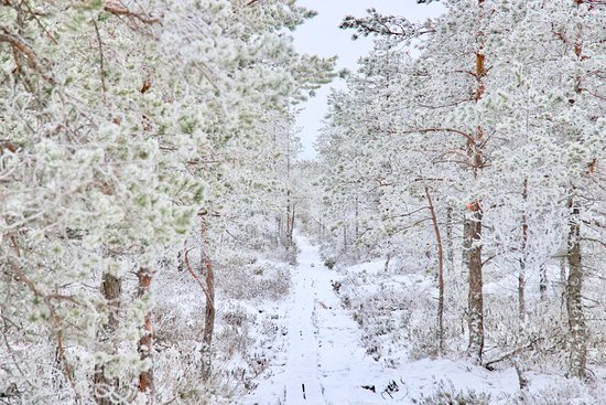 Poytya, Finland: Maisemaa Kurjenrahkalta 2018 tammikuu