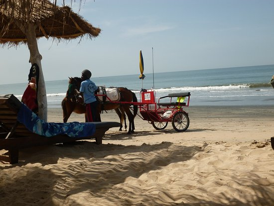 Kotu Beach: A new attraction, tired feet take a Kotu horse trot.