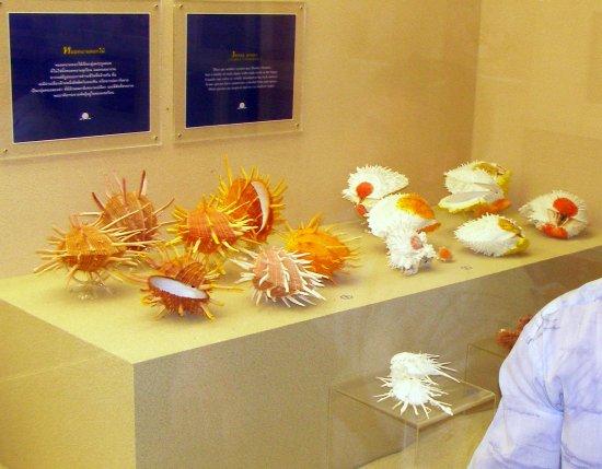 Shell World Museum: В музее