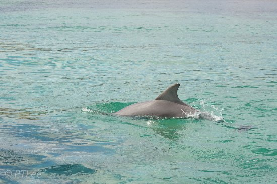 Kangaroo Island Marine Adventures: When the boat is calm, they do come very close at times.