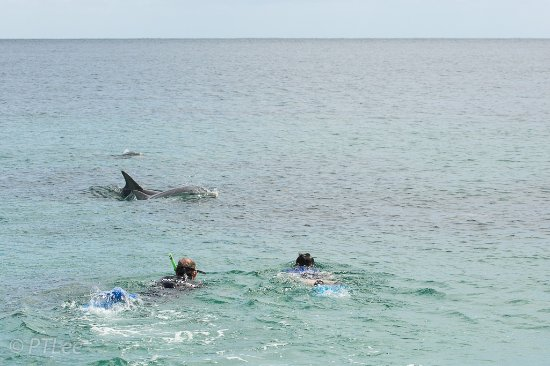 Kangaroo Island Marine Adventures: Swimming with the dolphins. Best to bring your own wet suit or rent one (for your size).