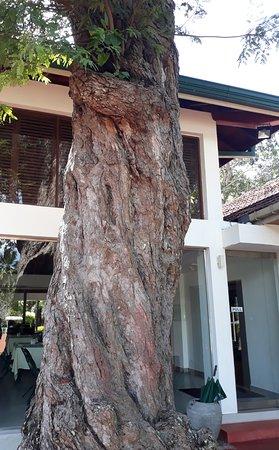 Tamarind Tree Hotel: Tamarind Tree