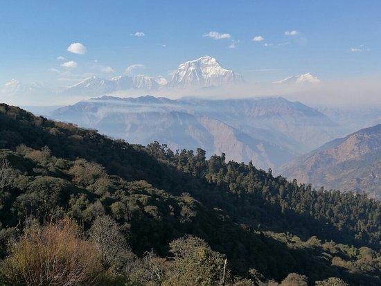 Ghorepani, Nepal: IMG_20180110_151736_large.jpg