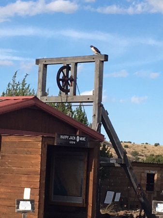 Fort Davis, TX: A red tail hawk finds the perfect perch at the Mining Heritage Exhibit.