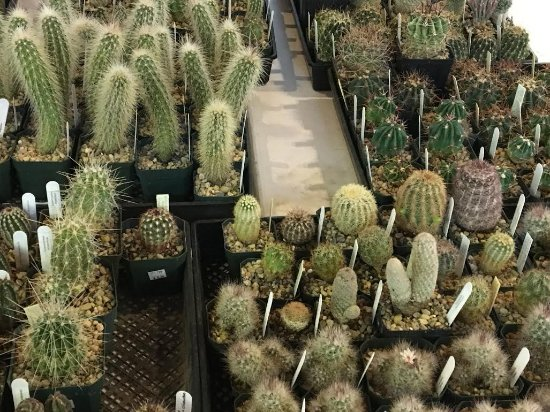 Fort Davis, TX: Our annual, once-a-year Cactus & Succulent Sale!