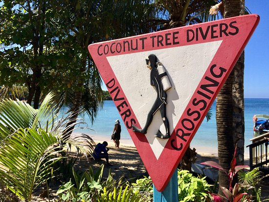 ‪Coconut Tree Divers‬