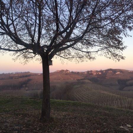 Priocca, Italy: Cantina Hilberg Pasquero