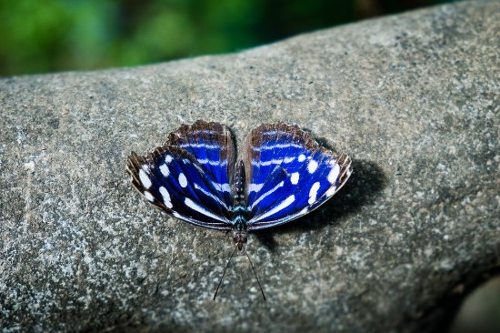 Poas Volcano National Park, Costa Rica: Butterfly Garden