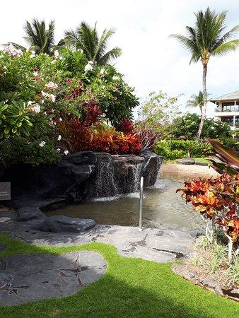 Waikoloa Beach Resort: The corner of beauty ...