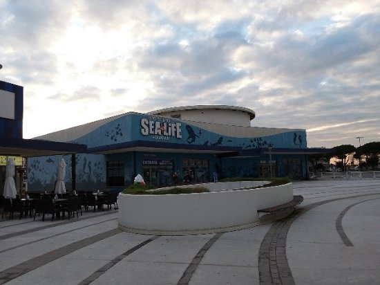 Sea Life - Picture of Lido di Jesolo Sea Life Aquarium ...