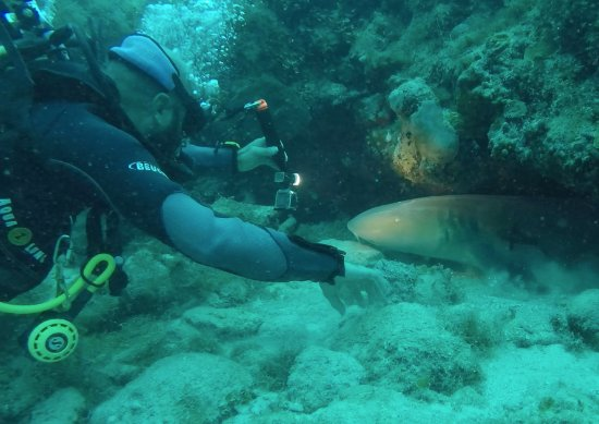Bayahíbe, República Dominicana: This is photo from our very last shark encounter. You can find more photo & video on our website