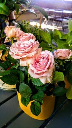 Breda di Piave, Italia: Locanda Rosa Rosas