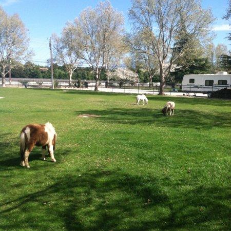 Quicksilver Ranch: photo0.jpg