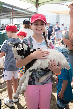 Scenic Rim, Australien: Holding a young goat.