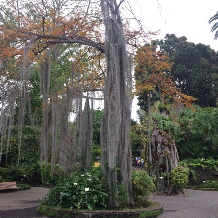 Botanical gardens jardin botanico puerto de la cruz pan lsko recenze - Botanical garden puerto de la cruz ...