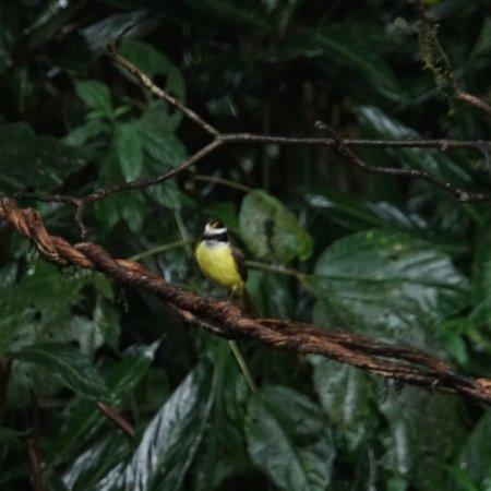 Selva Verde Lodge: photo2.jpg