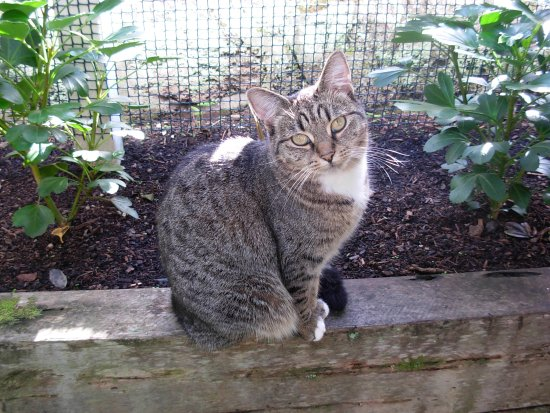 Devonport, New Zealand: My cat Pixie