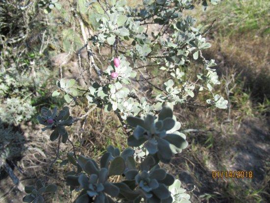 Texas Gulf Coast, TX: Flora