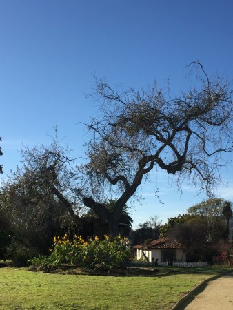 Adamson House and Malibu Lagoon Museum: Tree