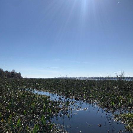 Lake Panasoffkee, Φλόριντα: photo1.jpg