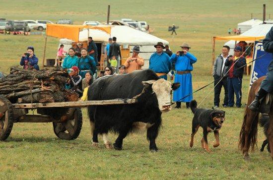 Festival nómada