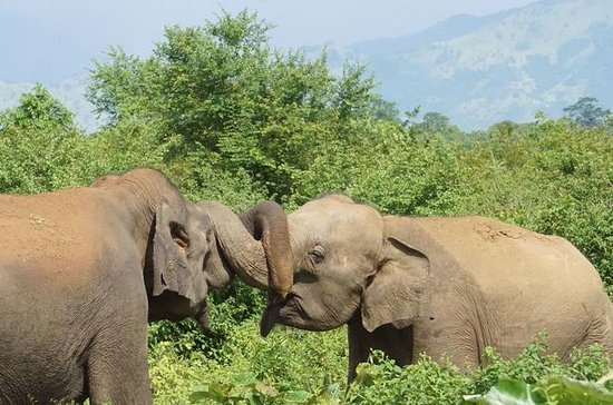 Day Excursions to Udawalawe From Colombo