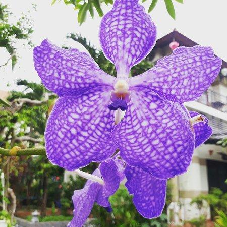 Botanic Garden Homestay: IMG_20180106_204459_600_large.jpg