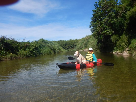 Babinda Kayaking: My dog Abbey and I loved this adventure.