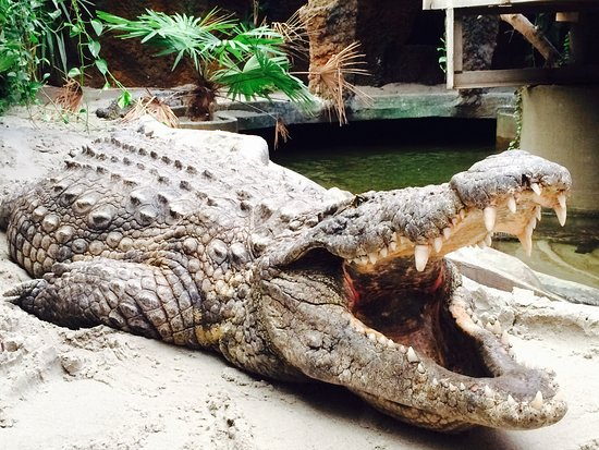 Krokodille Zoo