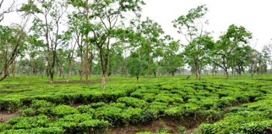 Assam Tours & Travels (Jorhat) - 2019 What to Know Before You Go