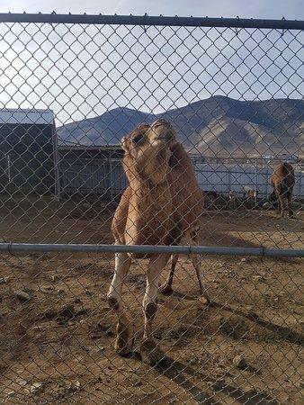 Last Minute Car Rental Deals >> Sierra Safari Zoo (Reno) - 2020 All You Need to Know ...