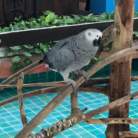 Burasari Resort: photo0.jpg