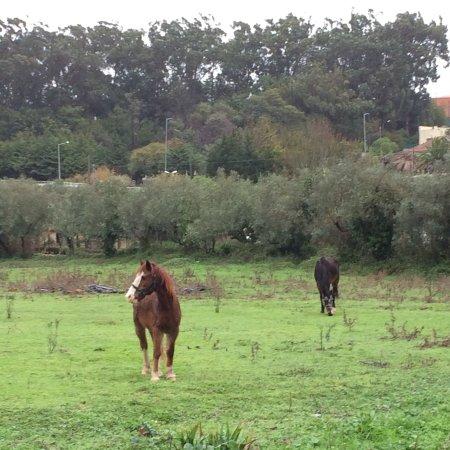 Algueirao - Mem Martins, Portugal: photo3.jpg