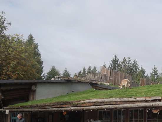 Coombs, Canadá: Exterior....goats on the roof