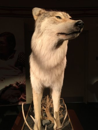 Sept Iles, Canada: Don't cry wolf!