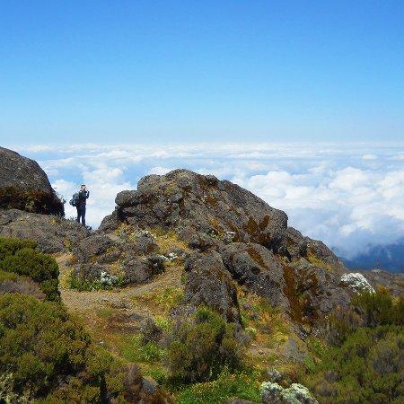 Moshi, Tanzania: At Shira camp, Mt. Kilimanjaro