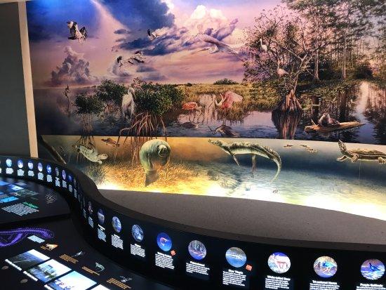ฟลอริดาซิตี, ฟลอริด้า: Evolution in Everglades