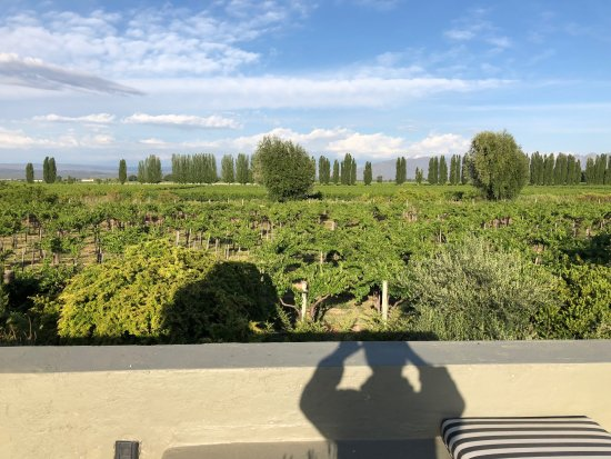 Cavas Wine Lodge: Vineyards and Andes seen from villa