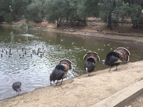 Ramona, CA: Common visitors here at the park
