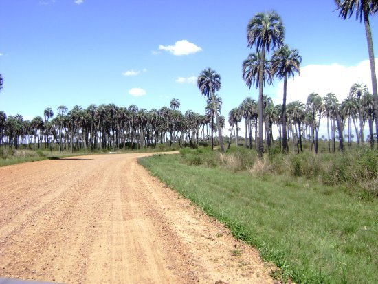 El Palmar National Park, Argentinien: Acceso al Parque Nacional El Palmar. Colón. Entre Ríos