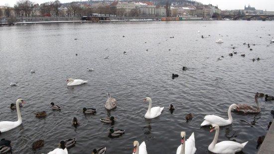 Park Inn Hotel Prague: Набережная - рядом, кормим птиц