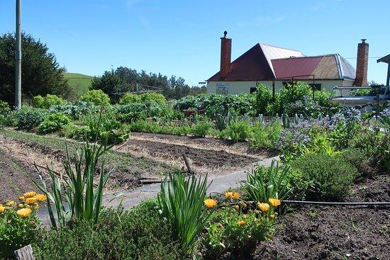 Lilydale, Австралия: Kitchen gardens