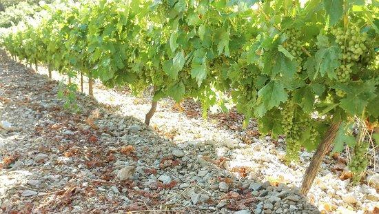 Alexandris Winery