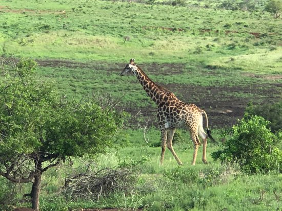 Phinda Private Game Reserve, South Africa: photo4.jpg