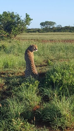 Phinda Private Game Reserve, South Africa: photo6.jpg