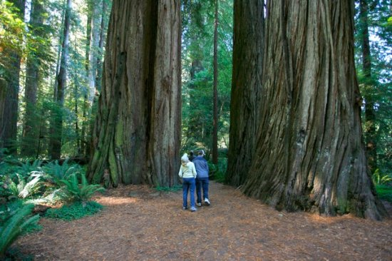 Ashland, OR: Giant redwoods on the Oregon coast tour near Smith river.