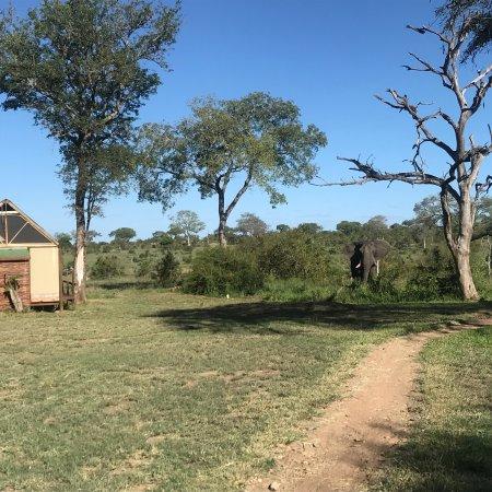 Manyeleti Game Reserve, South Africa: photo0.jpg