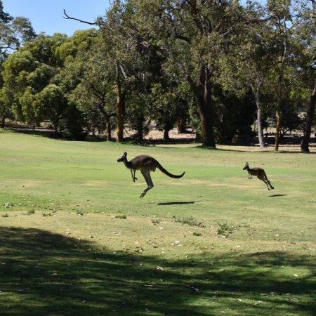 The Vines, Australia: photo6.jpg